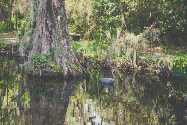 Visit Boone Hall Plantation in Charleston, Florida