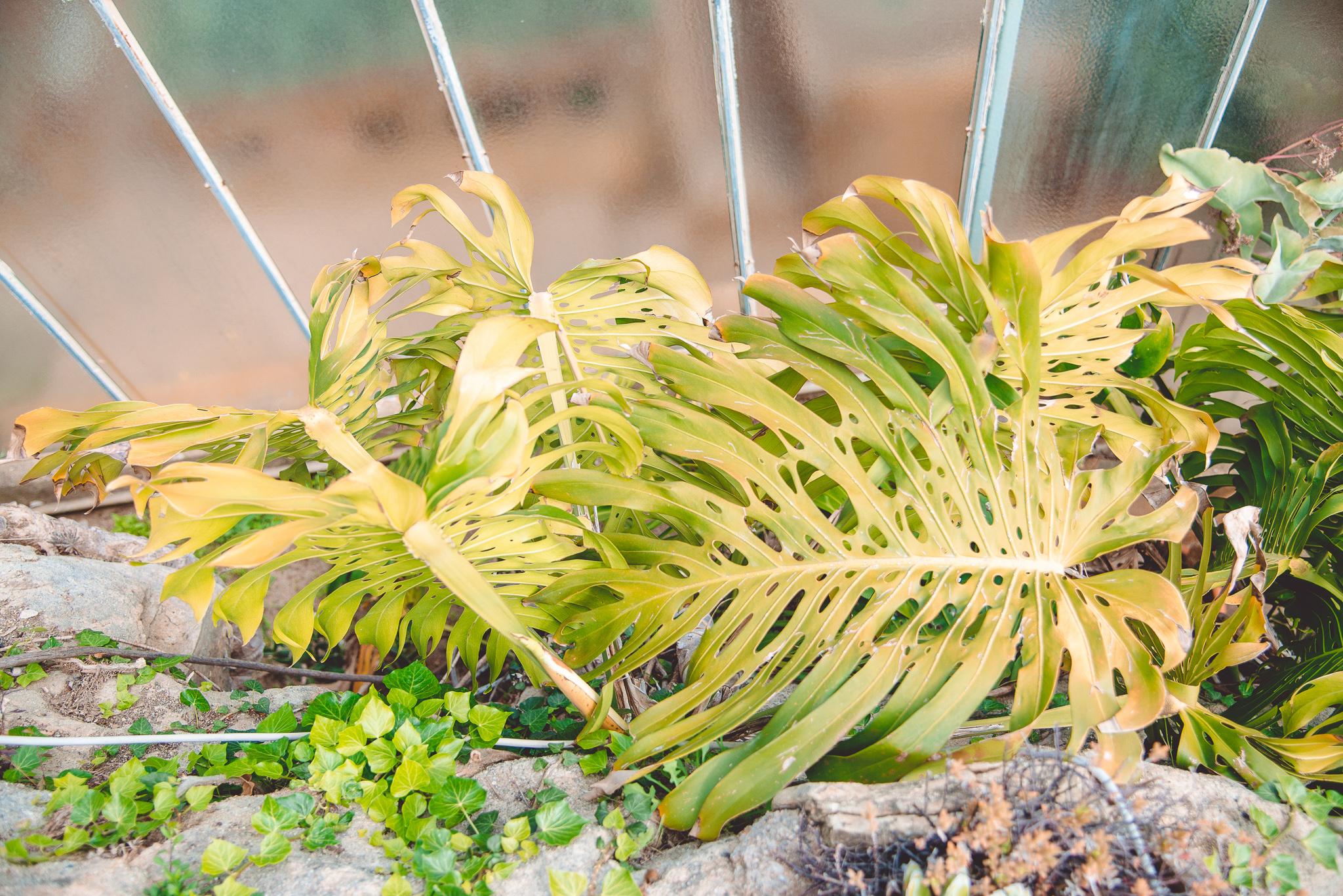 orto-botanico-pallanca-bordighera-2serialtravelers